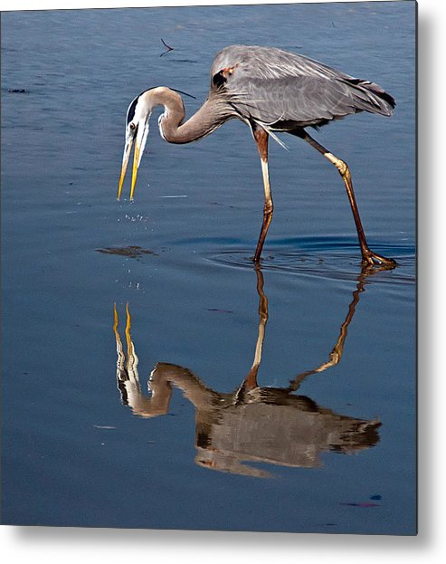 Bird Metal Print featuring the photograph Could That Be How I Really Look by Geraldine Alexander