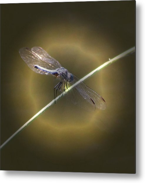 Insect Metal Print featuring the photograph Dragonfly 1 by Judith Szantyr