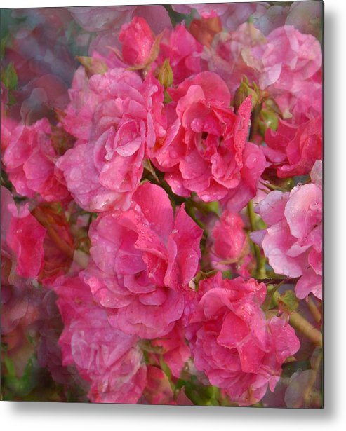 Rose Metal Print featuring the photograph Flower 290 by Joyce StJames