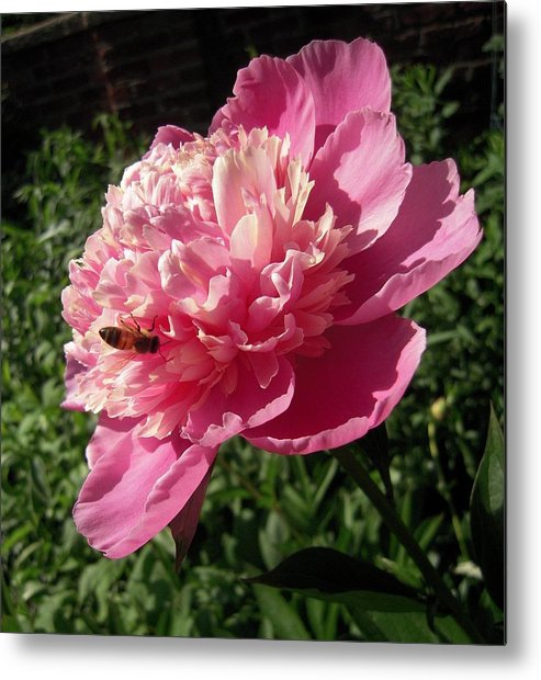 Bee Metal Print featuring the photograph Bee Just Being A Bee by Don Struke