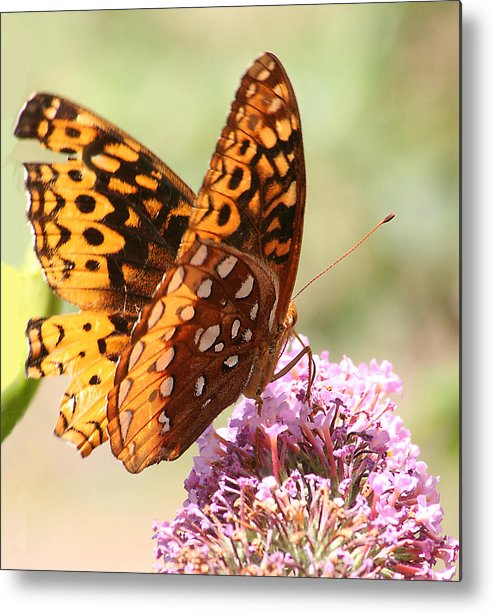 Metal Print featuring the photograph Butter Fly Thrown Looking Right by Curtis J Neeley Jr