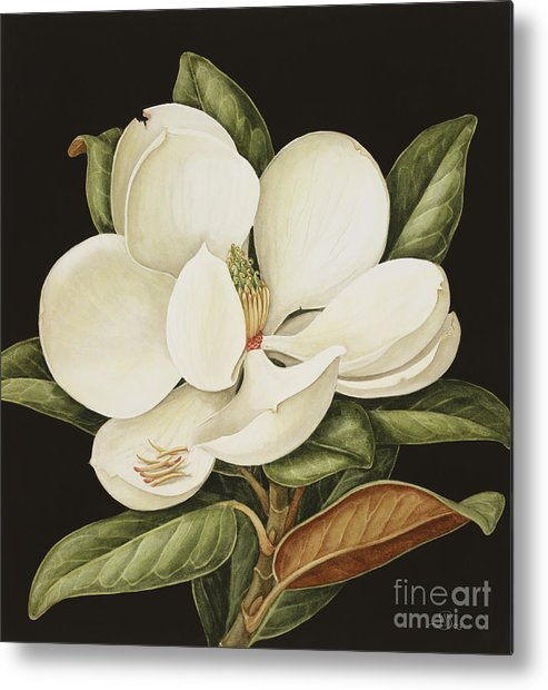 Still-life Metal Print featuring the painting Magnolia Grandiflora by Jenny Barron