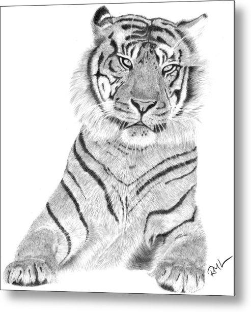 Tiger Artwork Metal Print featuring the drawing Sumatran Tiger by Rosanna Maria