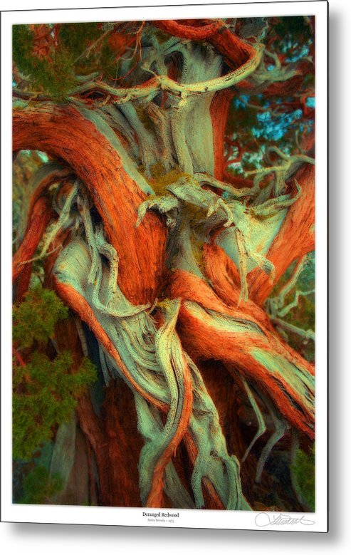Redwood Metal Print featuring the mixed media Deranged Redwood by Lar Matre