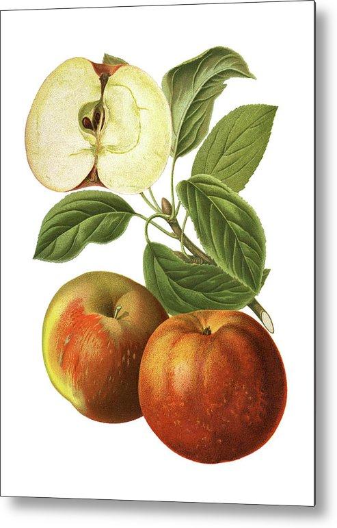 Art Metal Print featuring the digital art Apples by Ivan-96