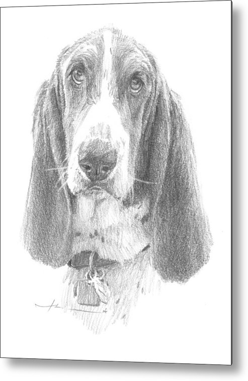 <a Href=http://miketheuer.com Target =_blank>www.miketheuer.com</a> Basset Hound Pencil Portrait Mike Theuer Metal Print featuring the drawing Basset Hound Pencil Portrait by Mike Theuer