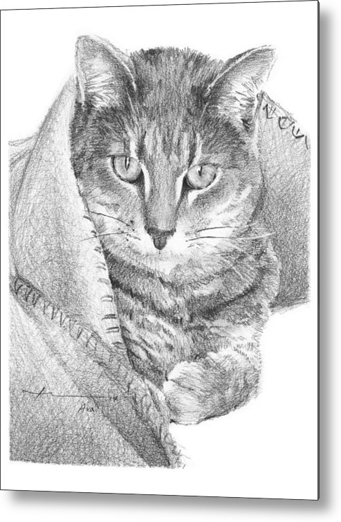 <a Href=http://miketheuer.com Target =_blank>www.miketheuer.com</a> Cat In A Blanket Pencil Portrait Metal Print featuring the drawing Cat In A Blanket Pencil Portrait by Mike Theuer