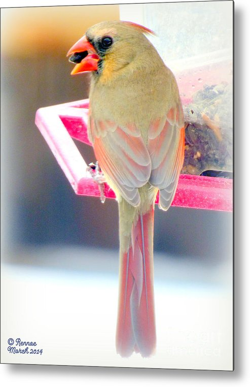 Bird Metal Print featuring the photograph Snack Time by Rennae Christman