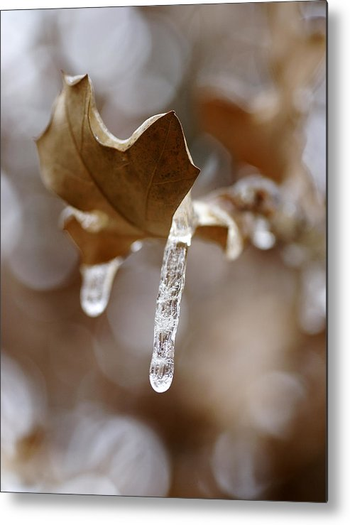 Ice Metal Print featuring the photograph Winter In The Hill Country by Bill Morgenstern