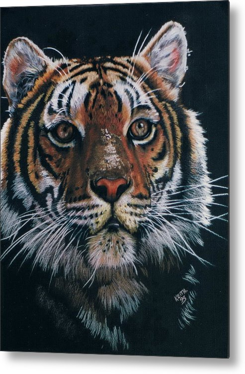 Tiger Metal Print featuring the drawing Backlit Tiger by Barbara Keith