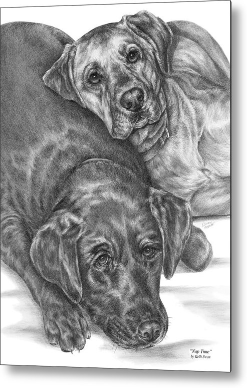 Two Metal Print featuring the drawing Labrador Dogs Nap Time by Kelli Swan