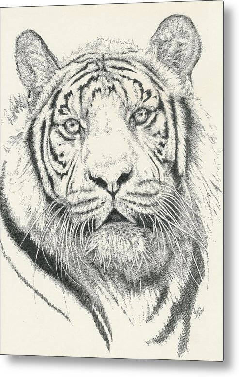 Tiger Metal Print featuring the drawing Tigerlily by Barbara Keith