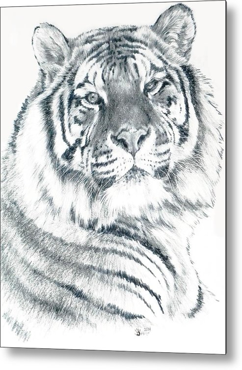 Tiger Metal Print featuring the drawing Voyager by Barbara Keith