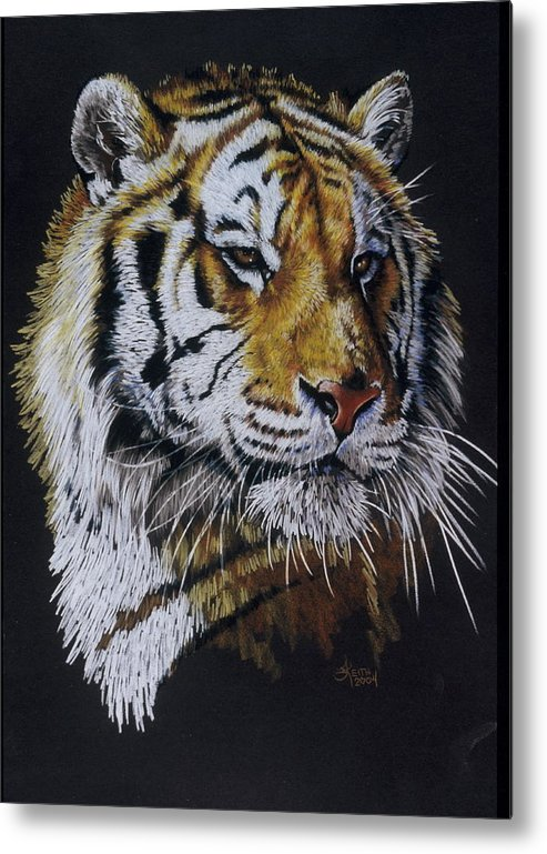 Panthera Metal Print featuring the drawing Nanook the Tiger by Barbara Keith