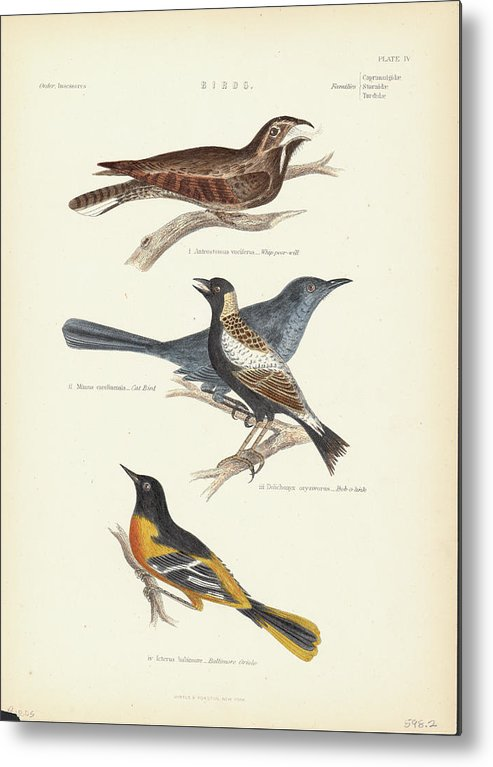 Music Metal Print featuring the photograph Order Passeriformes by Kean Collection