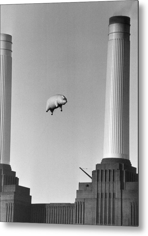 Pig Metal Print featuring the photograph Pink Floyds Pig by Keystone