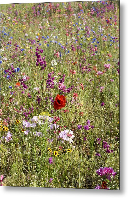 Outdoors Metal Print featuring the photograph Mixed colourful wildflowers by Lyn Holly Coorg