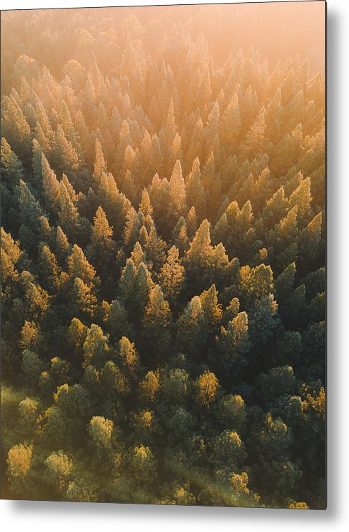 Tranquility Metal Print featuring the photograph High Angle View Of Trees In Forest by Connor Vaughan / EyeEm