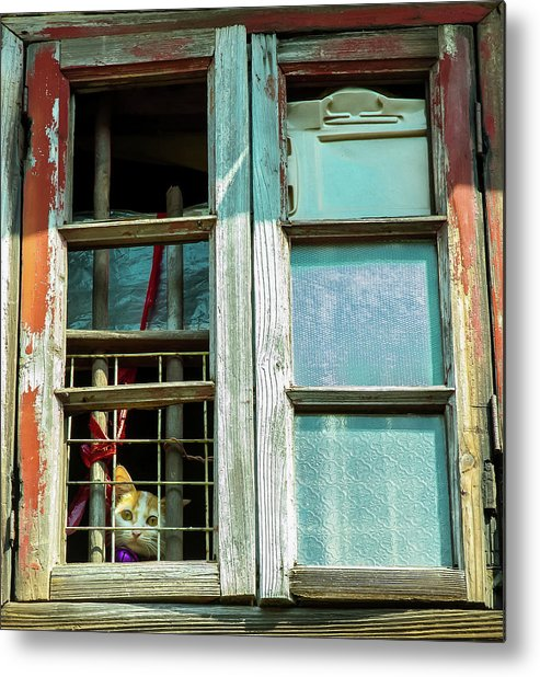 Cats Metal Print featuring the photograph Cute Cats Also Have The Blues by Romario Severino