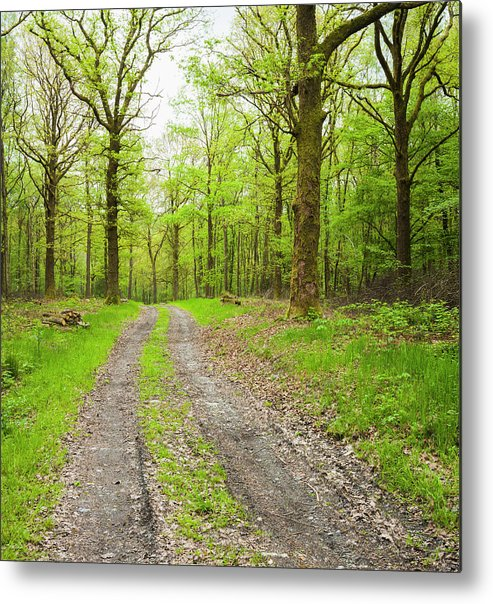 Scenics Metal Print featuring the photograph Dirt Road Surrounded By Trees In by Mike Kemp Images