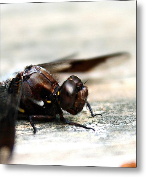 Dragonfly Metal Print featuring the photograph Dragonfly Close Up by Candice Trimble