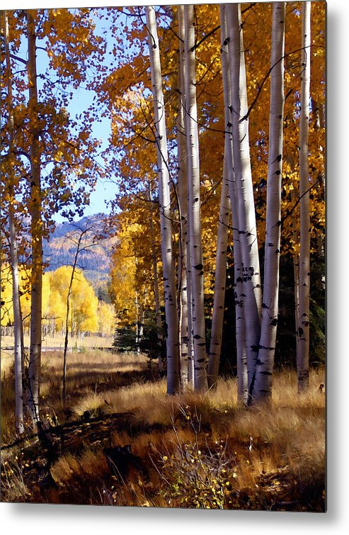 Trees Metal Print featuring the photograph Autumn Paint Chama New Mexico by Kurt Van Wagner