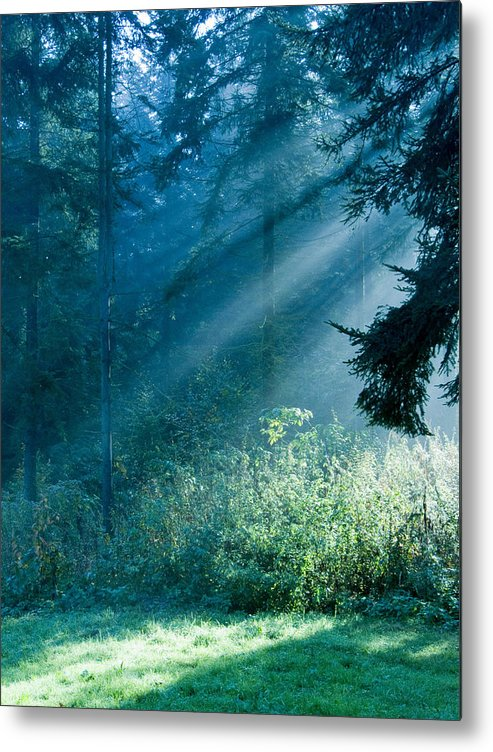Nature Metal Print featuring the photograph Elven Forest by Daniel Csoka