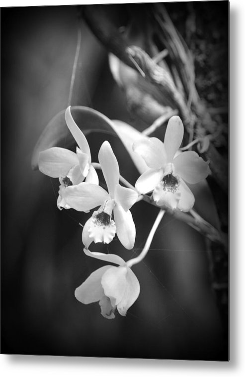 Orchid Metal Print featuring the photograph Orchid Delight by Lori Seaman