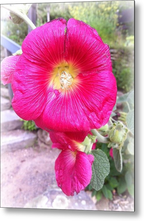 Pink Metal Print featuring the photograph Pink Flower by Jennifer Evans