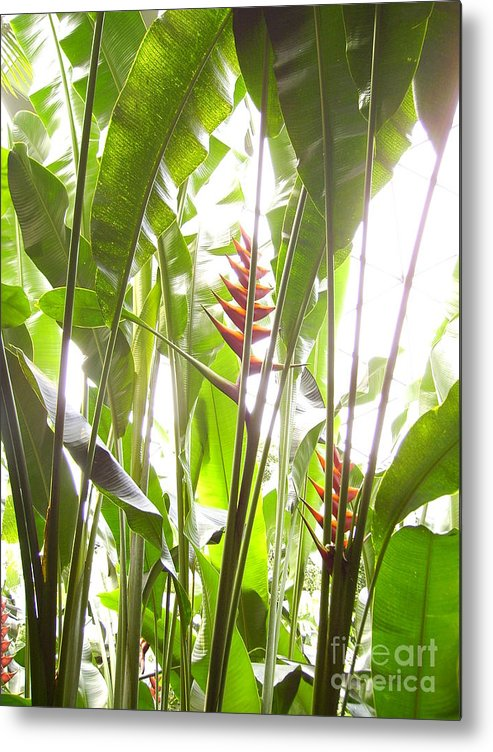 Plants Metal Print featuring the photograph Tropical2 by Heather Morris