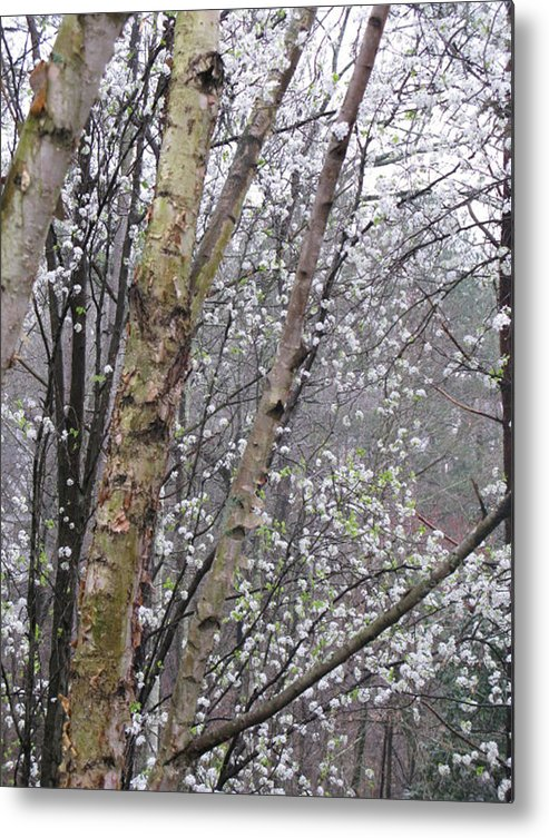 Trees Metal Print featuring the photograph A Winter Day by Donna Thomas