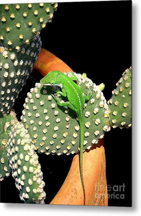 Nature Metal Print featuring the photograph Anole Hanging Out With Cactus by Lucyna A M Green