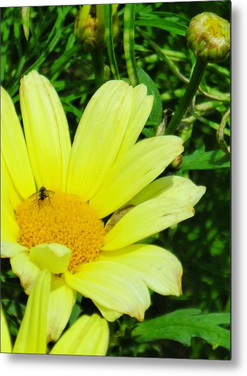 Flower Metal Print featuring the photograph Beautiful by Peter Mowry