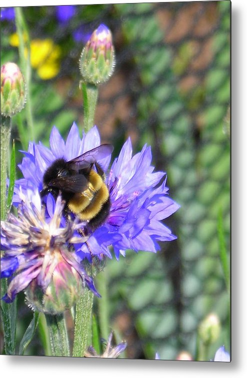 Bee Metal Print featuring the photograph Bee Bee by Peter Mowry
