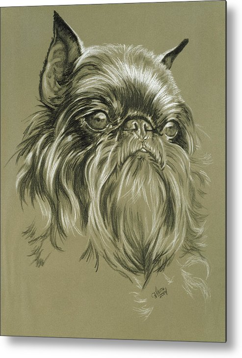 Toy Group Metal Print featuring the drawing Belgian Griffon by Barbara Keith