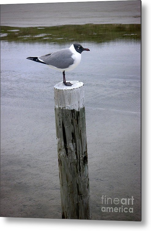 Nature Metal Print featuring the photograph Creatures Of The Gulf - Keeping Watch by Lucyna A M Green