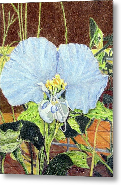 Fuqua - Artwork Metal Print featuring the drawing Day Flower by Beverly Fuqua
