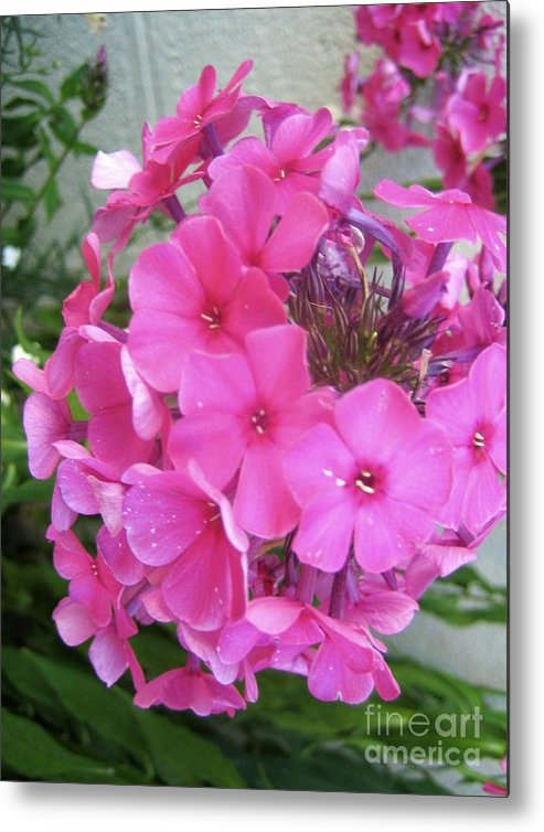 Pink Flowers Artwork Metal Print featuring the photograph Flowers All Around Me 2 by Reb Frost