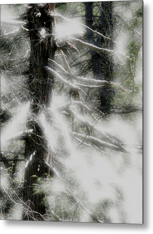 Trees Metal Print featuring the digital art Georgia Pines by Donna Thomas