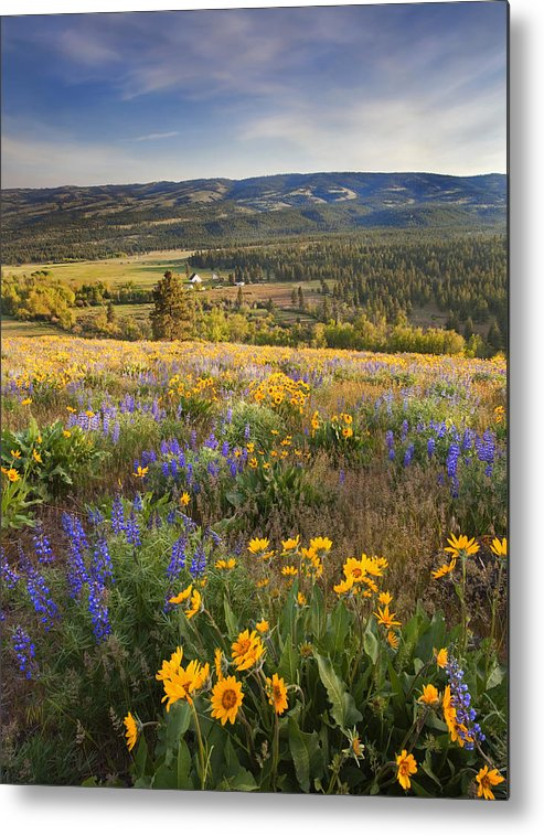 Wildflowers Metal Print featuring the photograph Golden Valley by Mike Dawson