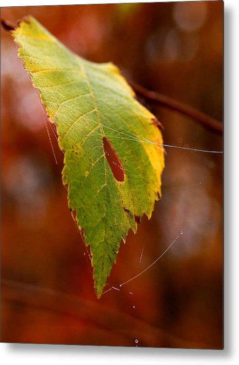 Leaves Metal Print featuring the photograph Green Silk by Linda McRae