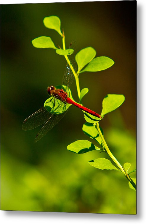Insects Metal Print featuring the photograph Landing Pad by Frank Pietlock
