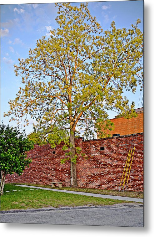 Tree Metal Print featuring the photograph Leafing Out by Linda Brown