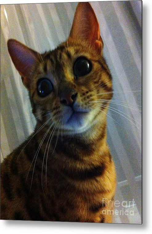 Mischievous Bengal Cat Metal Print featuring the photograph Mischievous Bengal Cat by Barbara Griffin