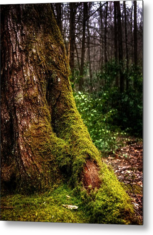 Tennessee Metal Print featuring the photograph Moss On A Tree by Greg Mimbs