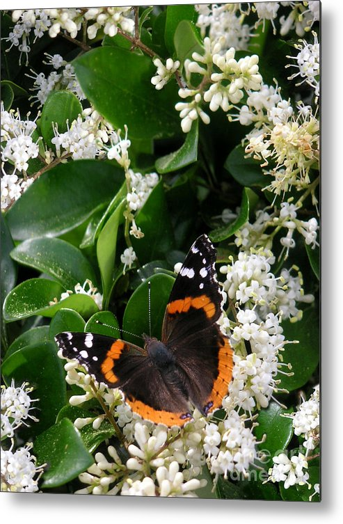 Nature Metal Print featuring the photograph Nature In The Wild - A Sweet Stop by Lucyna A M Green