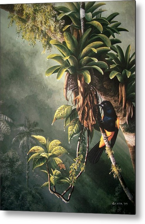 Chris Cox Metal Print featuring the painting St. Lucia Oriole In Bromeliads by Christopher Cox