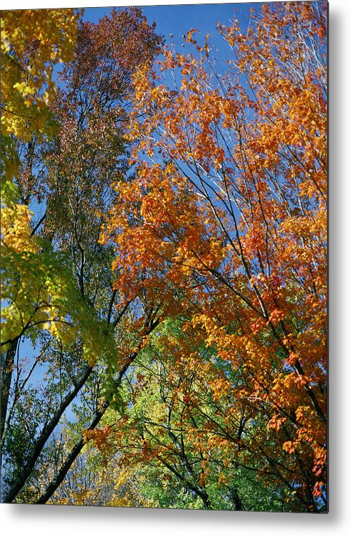Trees Metal Print featuring the photograph Study For Autumn 2 by Steve Parrott
