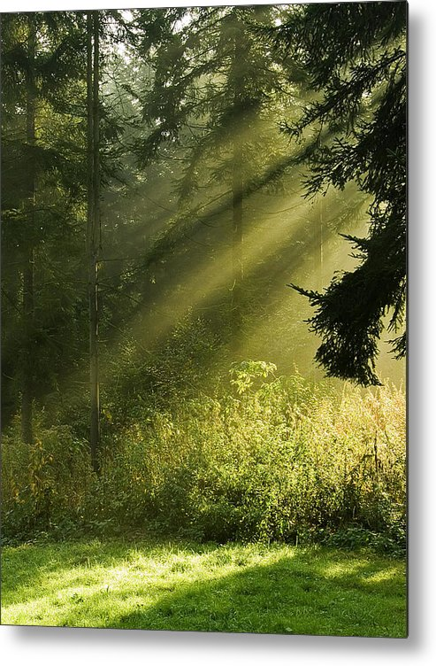 Nature Metal Print featuring the photograph Sunlight by Daniel Csoka