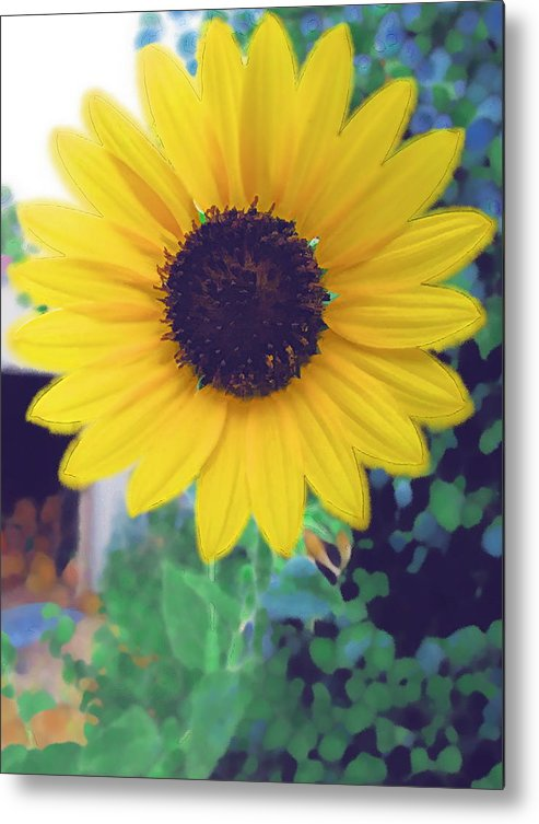 Sun Flower Metal Print featuring the photograph The Sunflower by Chuck Shafer